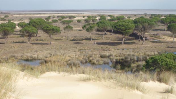 Uno de los humedales del Parque Nacional de Doñana