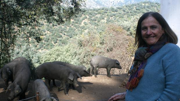 Chelo Gámez, en una de las fincas que regenta junto a algunos de los cerdos en plena montanera