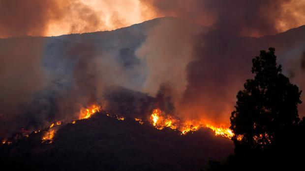 Detenido un hombre sospechoso de haber causado el incendio de Estepona al quemar una colmena