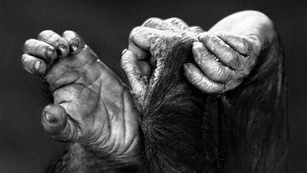 Fotografía de la serie «Primates» (2015), de Isabel Muñoz, en su exposicióm actual «Álbum de familia» en la galería Blanca Berlín de Madrid