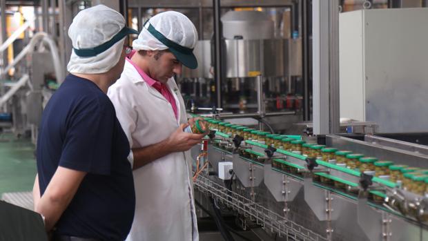 Instalaciones de la cooperativa Manzanilla Olive