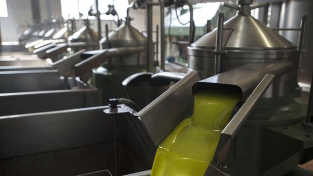 La producción de aciete de oliva se acelera en enero