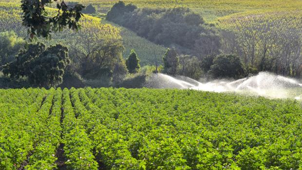 Sistema de riego en un cultivo