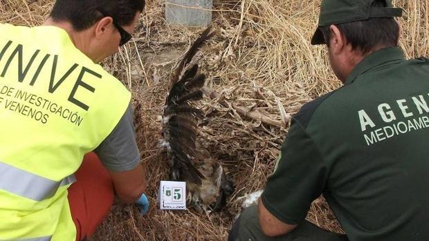 El envenenamiento es la principal causa voluntaria de extinción de especies en España