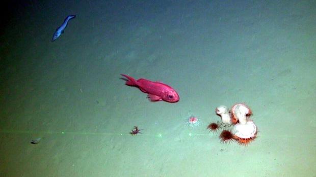 La sexta campaña oceanográfica del Life IP Intemares cartografía los cañones submarinos del Cap Bretón