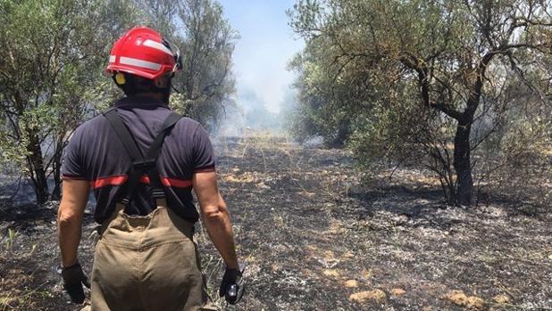 Este lunes se han declarado varios incendios en el Aljarafe sevillano
