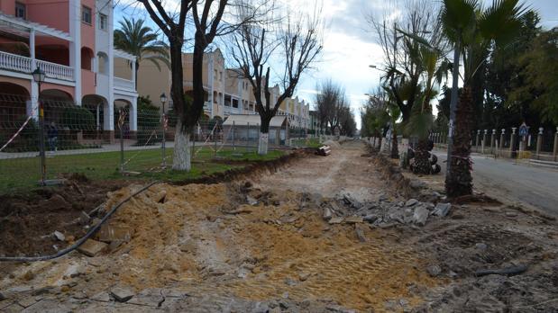 En los últimos años han desaparecido numerosos árboles del casco urbano de Utrera