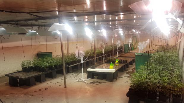 Interior de la nave donde cultivaban la marihuana