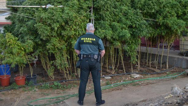 Parcela en la que cultivaban la marihuana