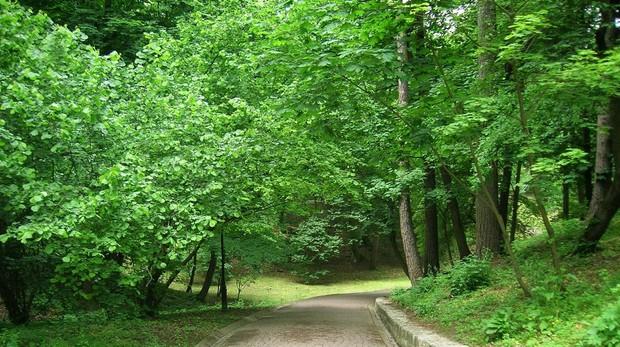 Vivir cerca de parquesy jardines reducereducía la carga de trabajo del corazón