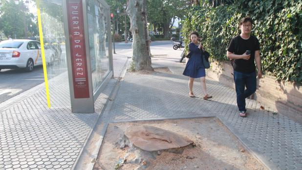 Dos turistas sortean un alcorque vacío en la calle Palos de la Frontera