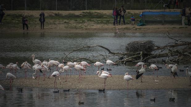 La Reserva Natural Concertada Cañada de los Pájaros, en La Puebla del Río
